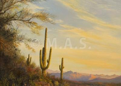 Desert Morning