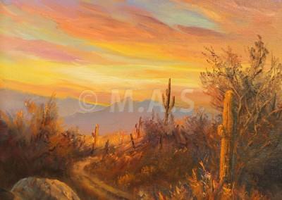 Morning Desert Glow